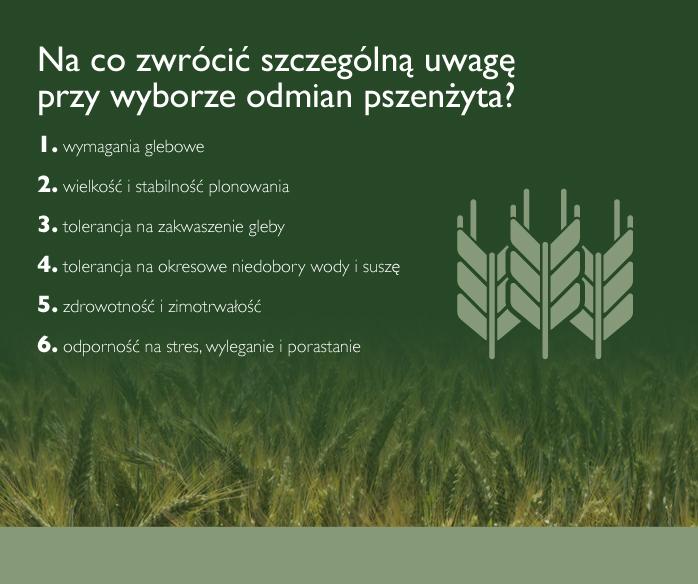 charakterystyka odmian pszenżyta ozimego