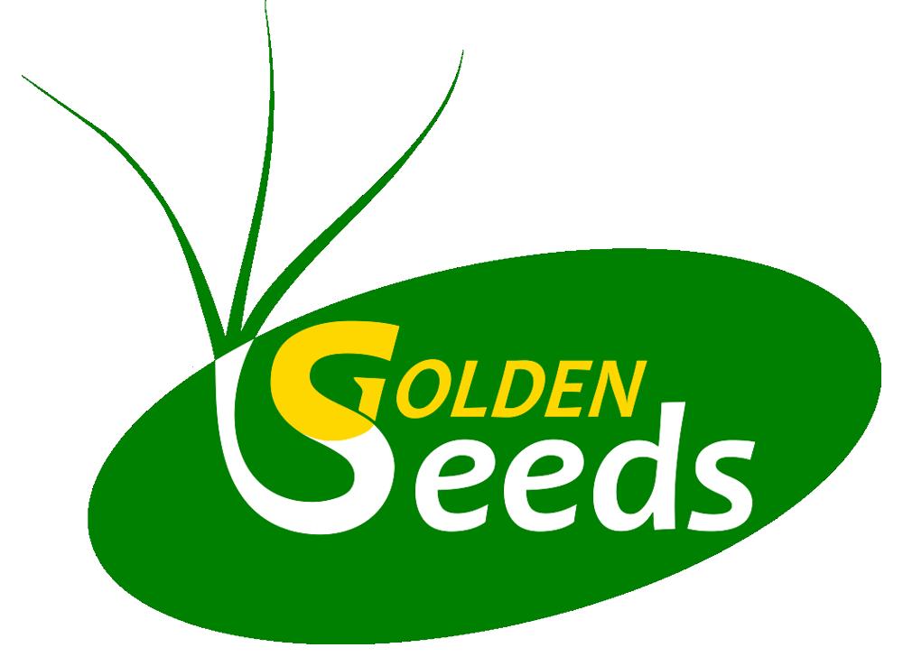 Producent nasion zbóż i roślin strączkowych