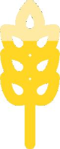 wysokość pszenicy mandaryna