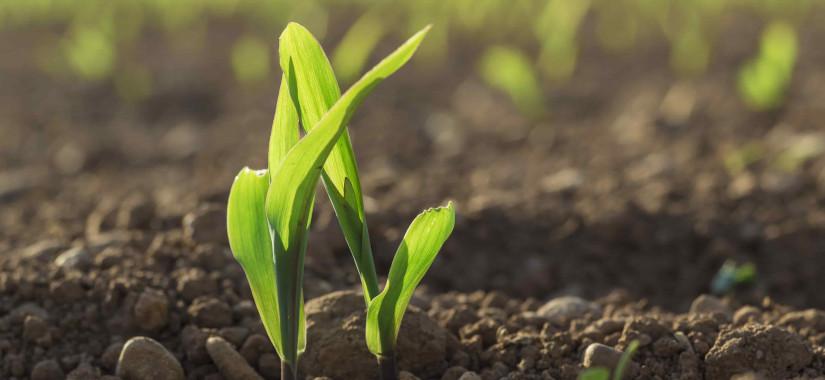 Jak ochronić zapas wody w glebie?