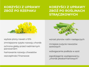 Korzyści z uprawy zbóż po rzepaku i po roślinach strączkowych