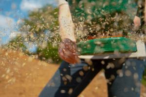 Istnieją różne sposoby rozsiewania nasion