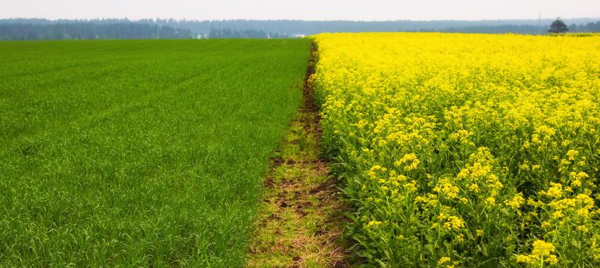 Zmianowanie roślin uprawnych