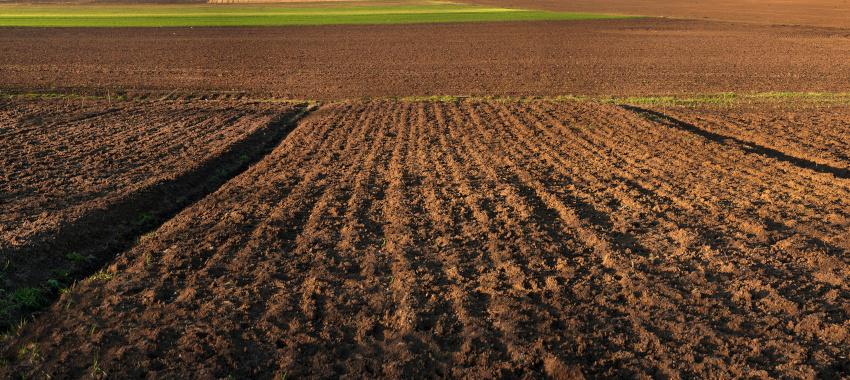 Technologia uprawy zbóż jarych po wypadnięciu ozimin